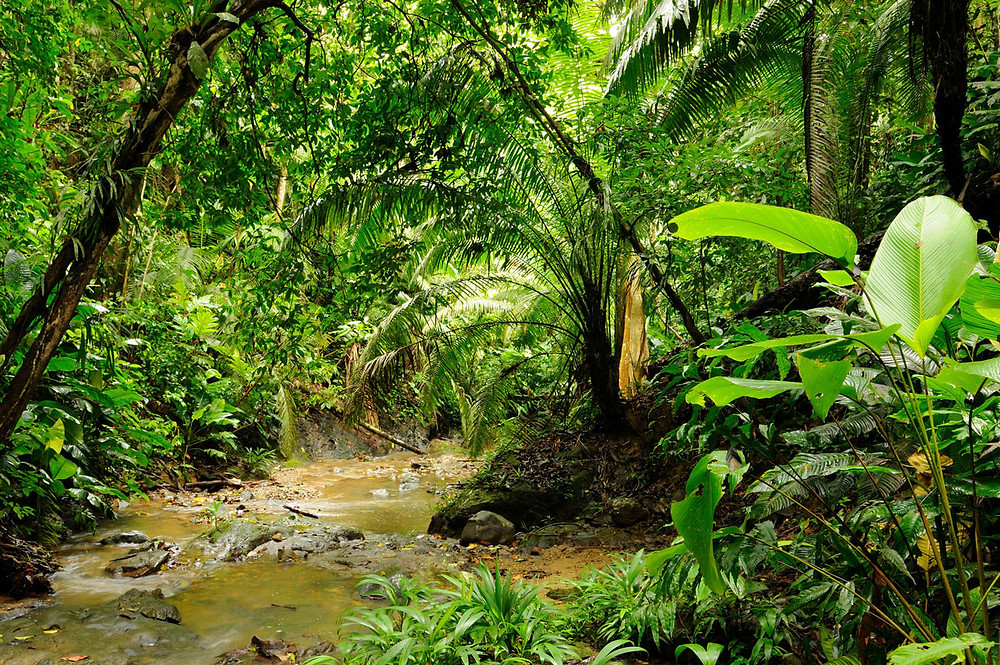 Columbia Jungle