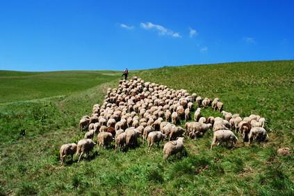 Sheep become Shepherds