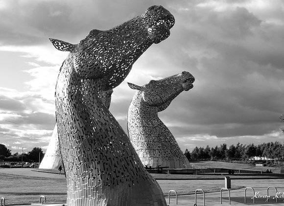 Double Kelpies Looking at the Sky