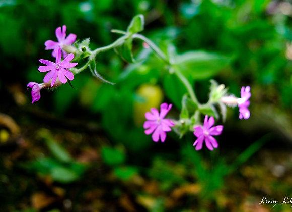 Purple Hanging Flowers