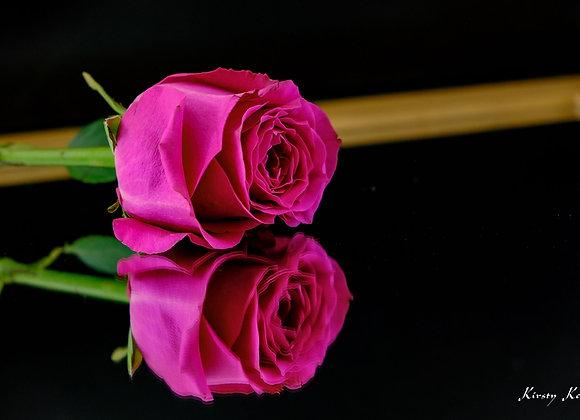 Pink Rose on Mirror