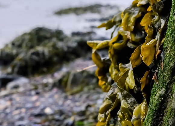 Seaweed on the Pier