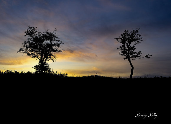 Two Trees at Sunset