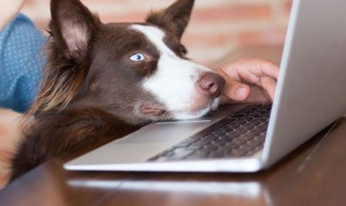 dog near keyboard.JPG