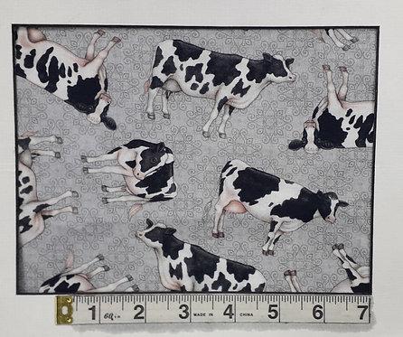 Cows - Grey