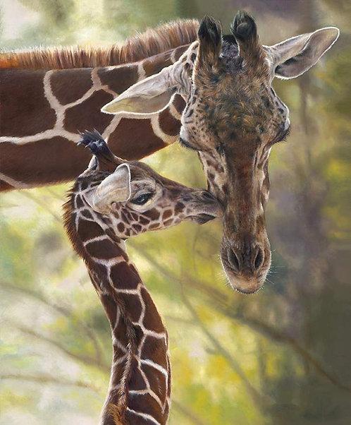 On Safari - Giraffe Mother & Baby