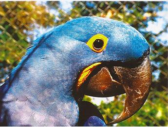 Levantamento_fauna_flora_insularis2005-8
