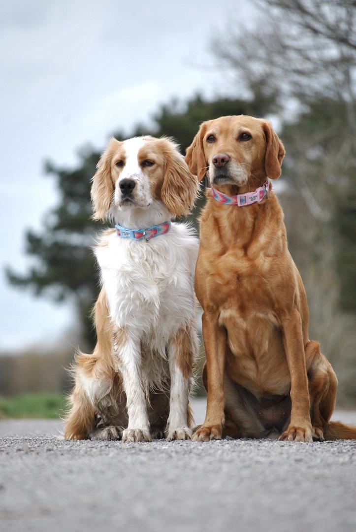 Bailey & Charlie