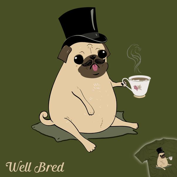 well bred pug