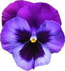 flower no background.jpeg