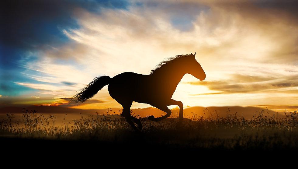 small_horse_img.jpg