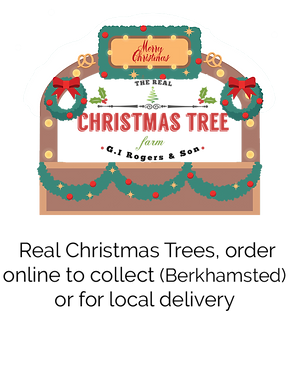 ChristmasTrees.png