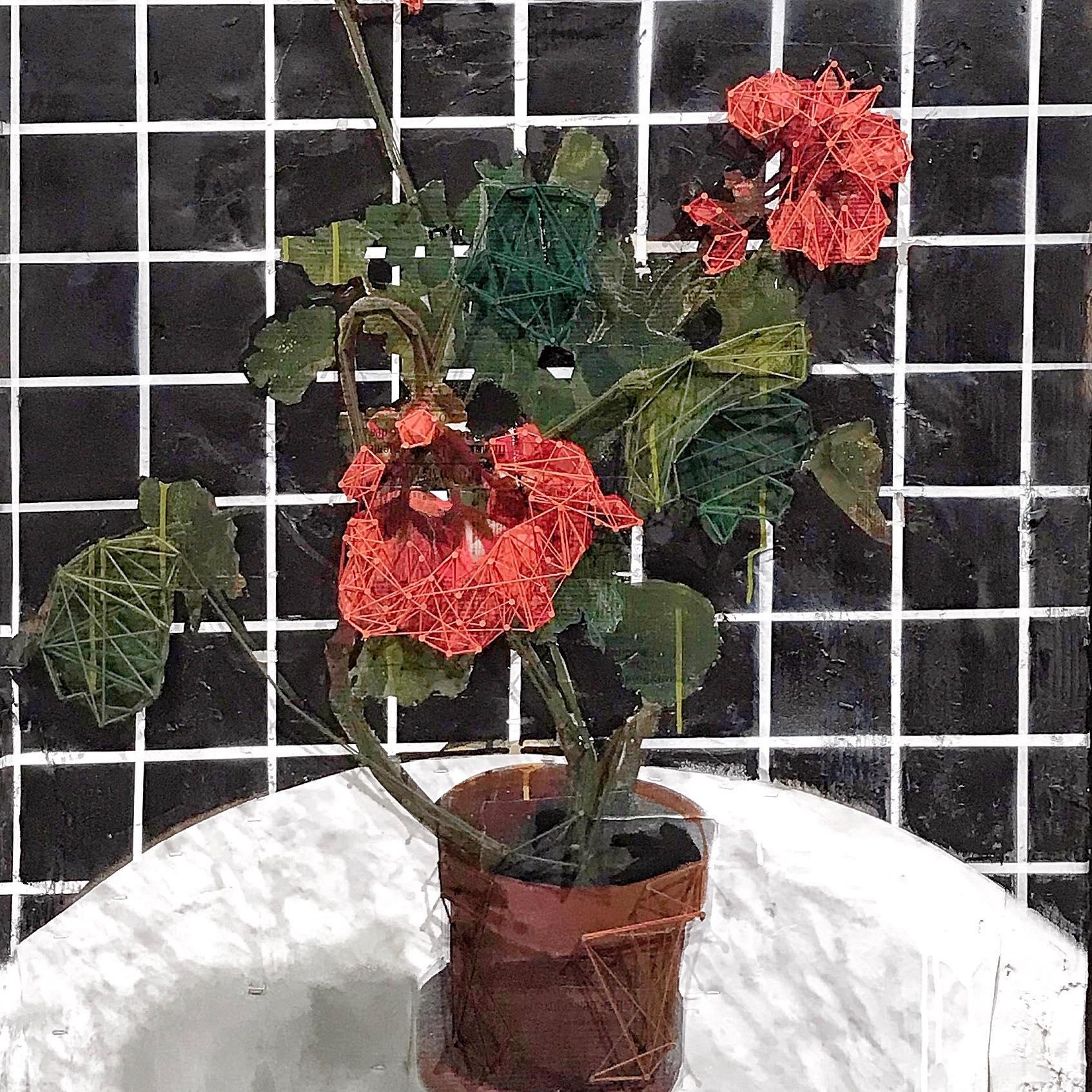 Géranium en pot, merci Janine