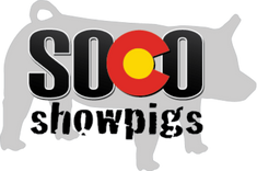 SOCO Showpigs