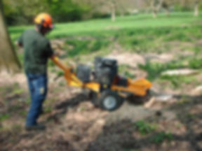 tree-stump-grinder3.jpg