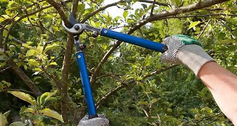 Tree-Pruning-600x320.jpg