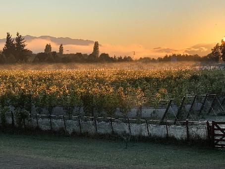 Trevelin, la nueva indicación geográfica del vino argentino
