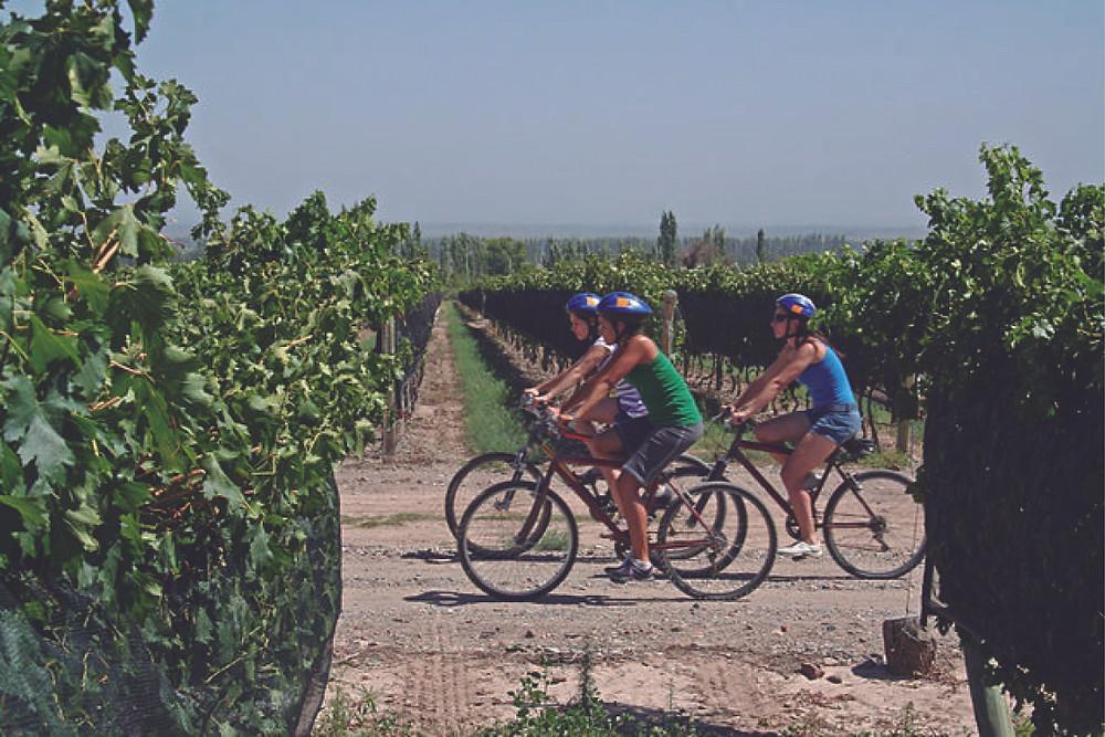 Bicletas entre las viñas de Bodegas Bianchi