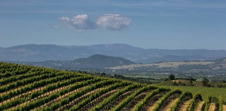 Sonoma County viñedos