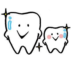 むしばの無い歯