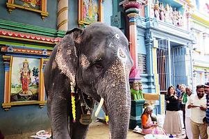 l-elephante.jpg