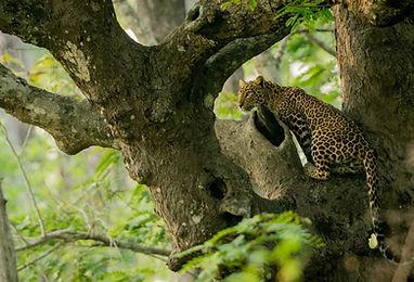 leopard-nagarhole-india-1920x1080.jpg