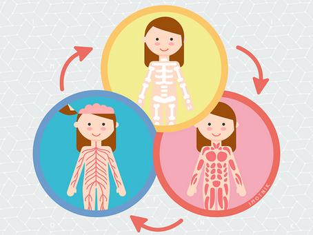 Quiropraxia e o sistema neuro-músculo-esquelético. O que?? – Parte 1