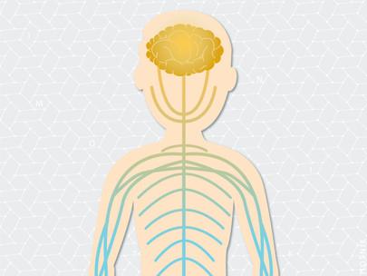Sistema Nervoso Somático: coordenando suas ações desde sempre