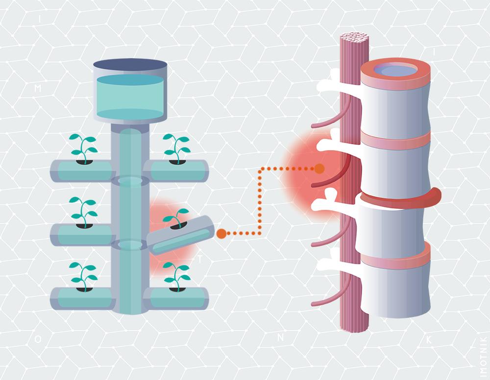 Comparação entre o sistema Neuro-músculo-esquelético com um encanamento.