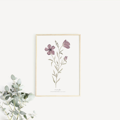 Crimson Flax Art Print