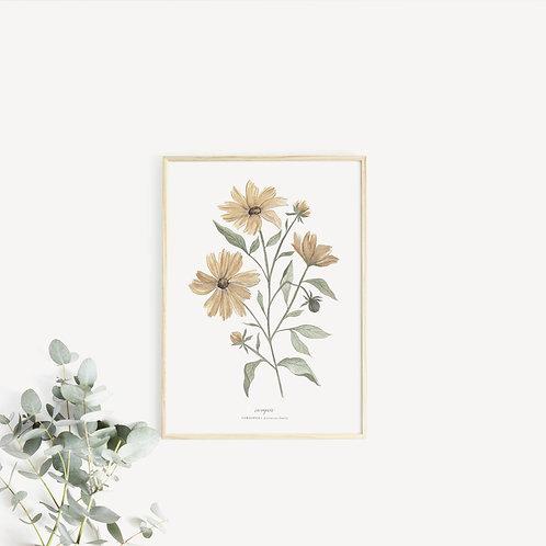Coreopsis Art Print