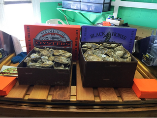 Provisions: Our Oyster Months