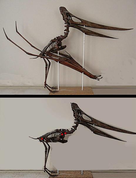 Vorlage für den Körper: Flugsaurier Pterandoton