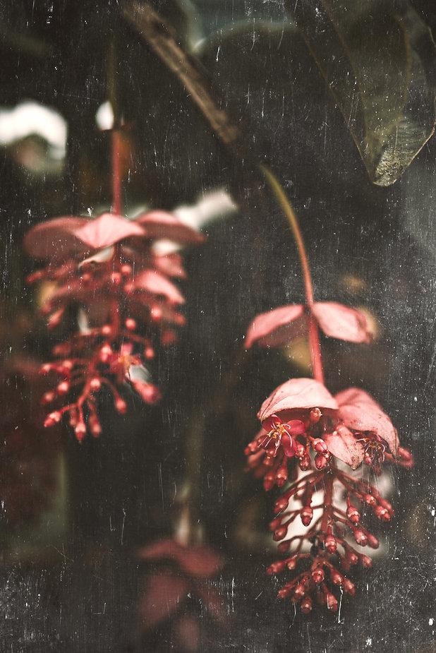 Eva Krebbers-tumbleweedandfireflies Phot
