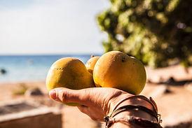 fruitts.jpg