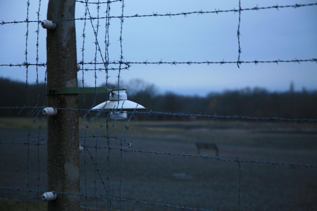 Buchenwald-alba