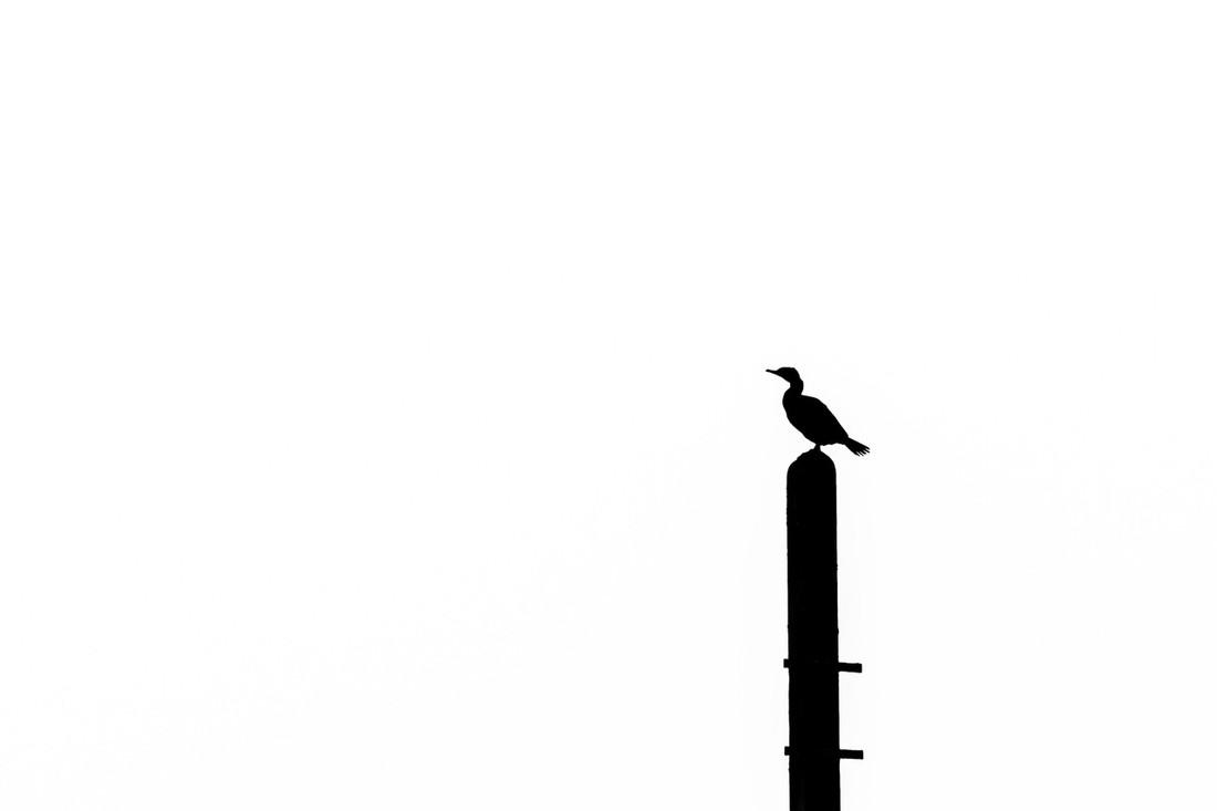 Ineke de Waal 1612_Zwrt- wit geen grijs_