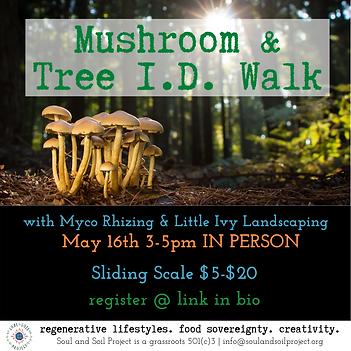 Mushroom & Trees.png