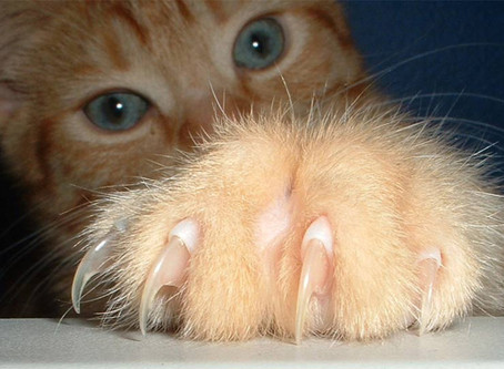 What New York State Declawing Ban Can Teach Us About Veterinary Industry