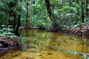 """Projeto luta em defesa do """"último igarapé limpo de Manaus"""""""