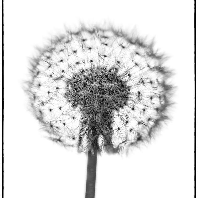 Flowers 7
