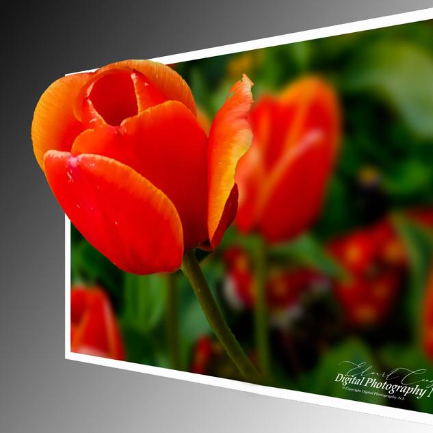3d-flower