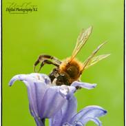Bee busy in flower