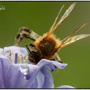 Bee busy in Flowers