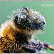 Eye of a Bee.jpg