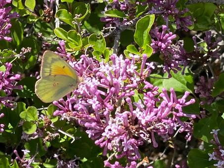 78: Heal The Earth – Save The Pollinators, USA
