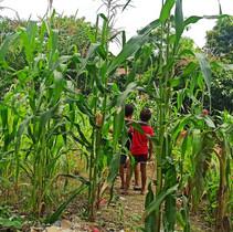 46: New Roots Initiative Backyard Farming, Philippines