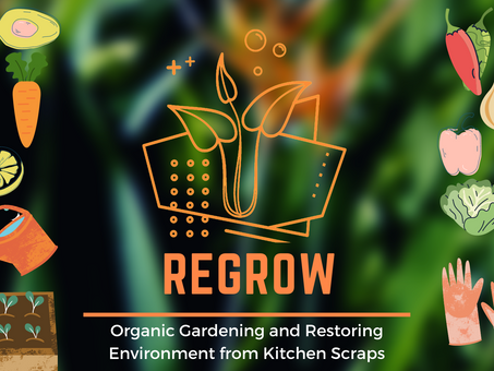 11: Regrow – Organic Gardening from Kitchen Scraps, International