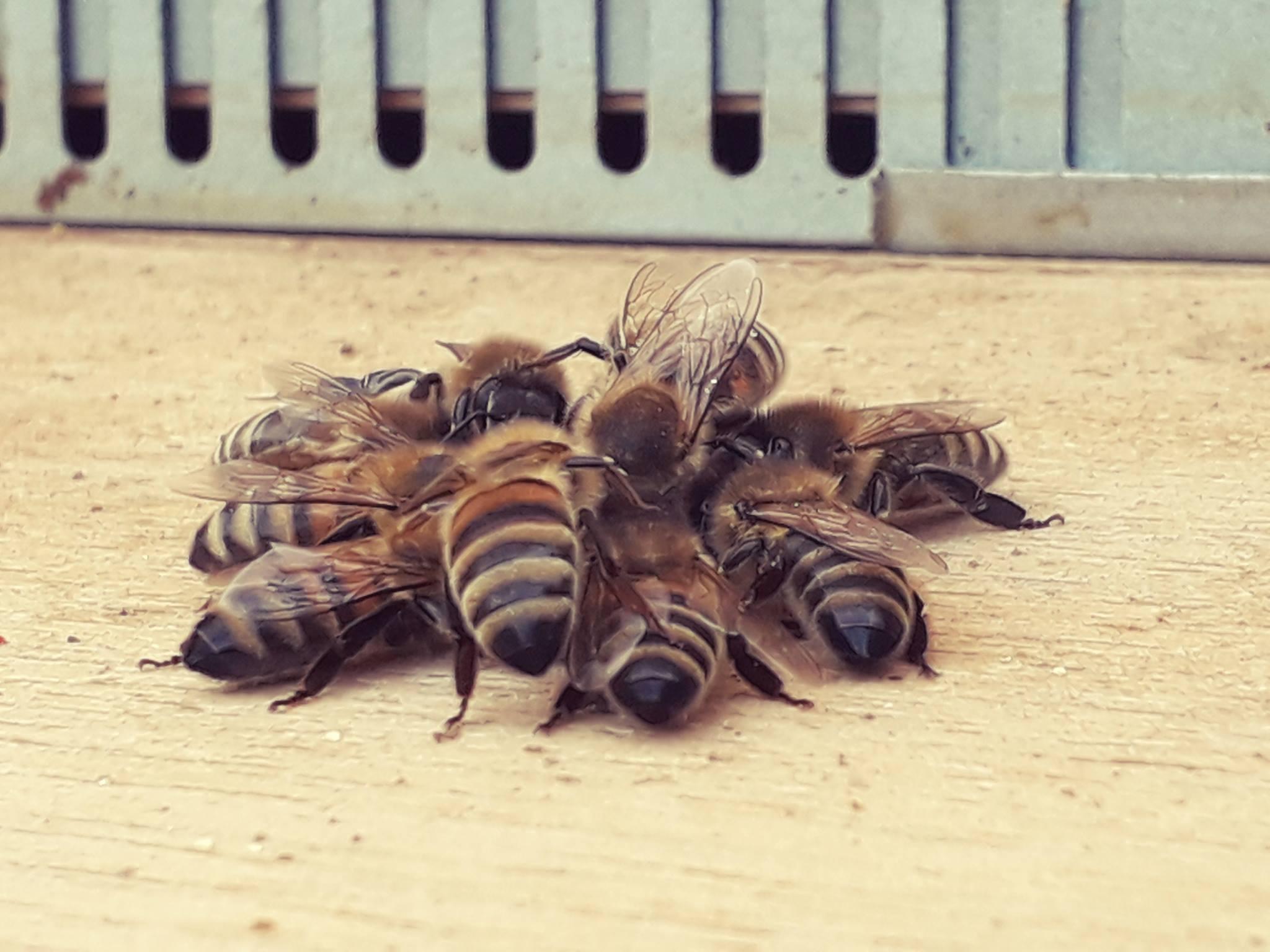 bijen.jpg