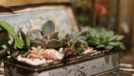 Succulent Vintage Tin Terrarium